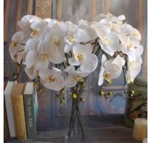 FLEUR ORCHIDEE LATEX BLANC