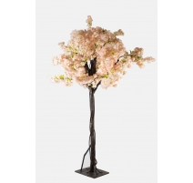 ARBRE CERISIER ROSE PALE 2M